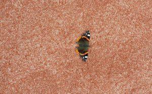 terrains confortables même pour les papillons